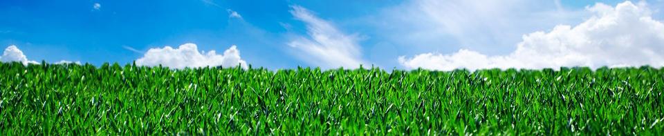 sky_grass1